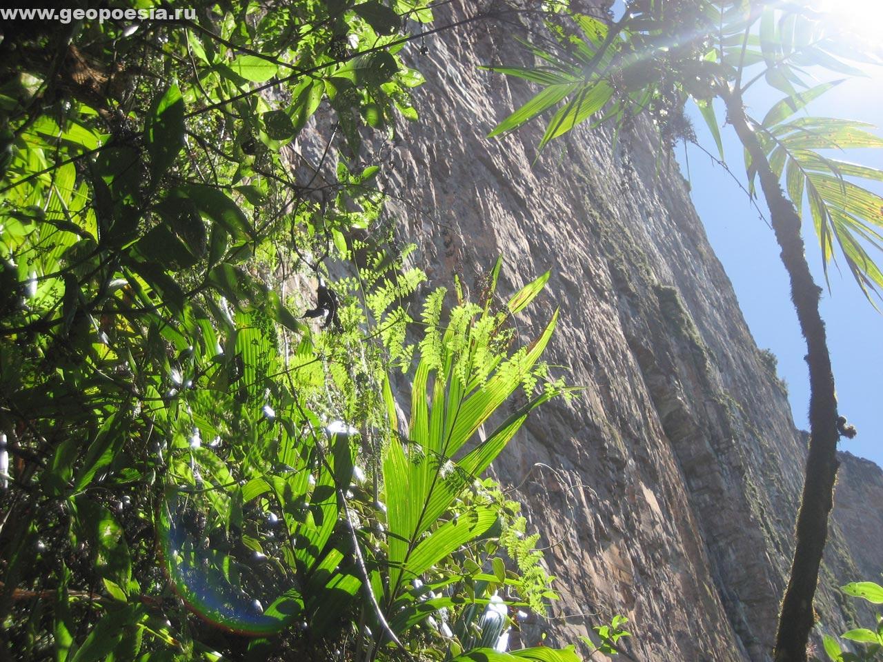 Фото экваториального леса рорайма